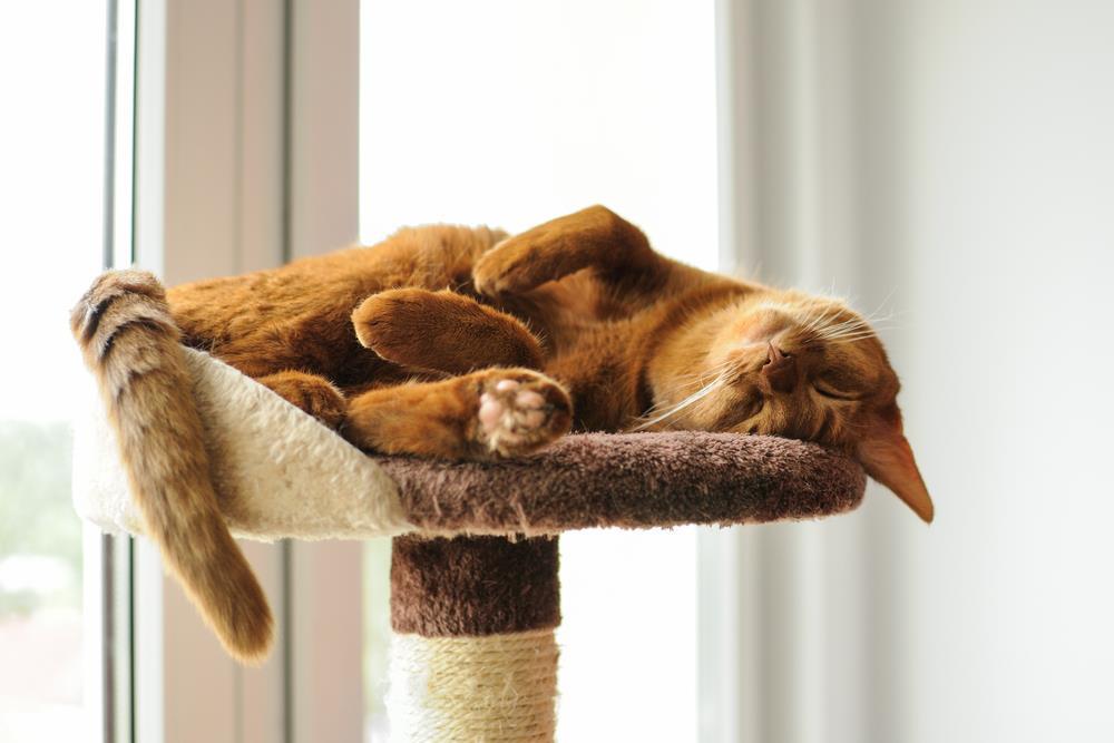 chat-sur-arbre-a-chat